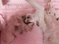 Kittens-dag-20-2