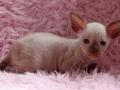 Kittens-dag-29-katertje