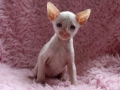 Kittens-dag-29-poesje-2
