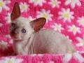 Kittens-tulp-032