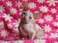 Kittens-tulp-033