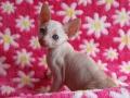 Kittens-tulp-034