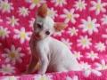 Kittens-tulp-035