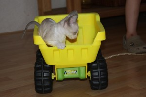 Kittens-2009-Phlox-10