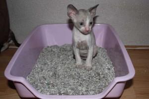 Kittens-2009-Phlox-7