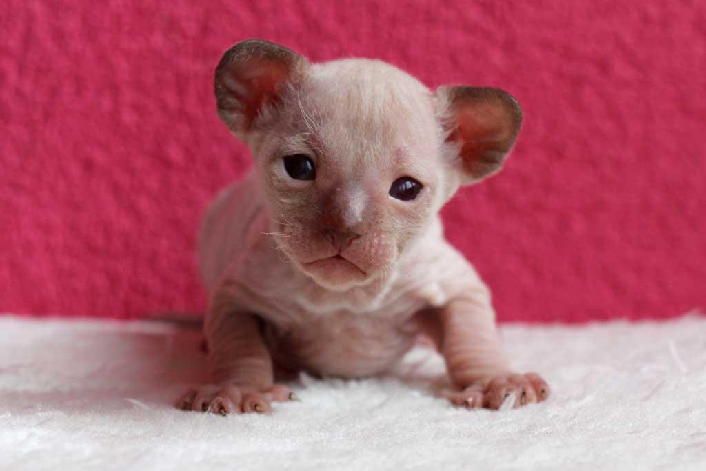 Kittens-dag-20-katertje