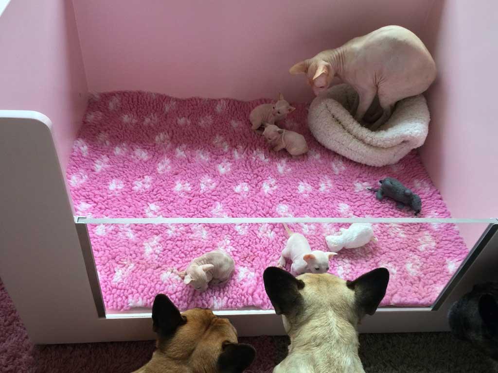 Kittens-hondjes-1