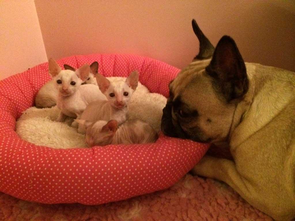 Kennismaken Met De Honden