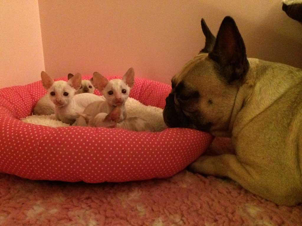 Kittens-hondjes-5